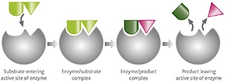wine_enzymes_figure1_otherimage
