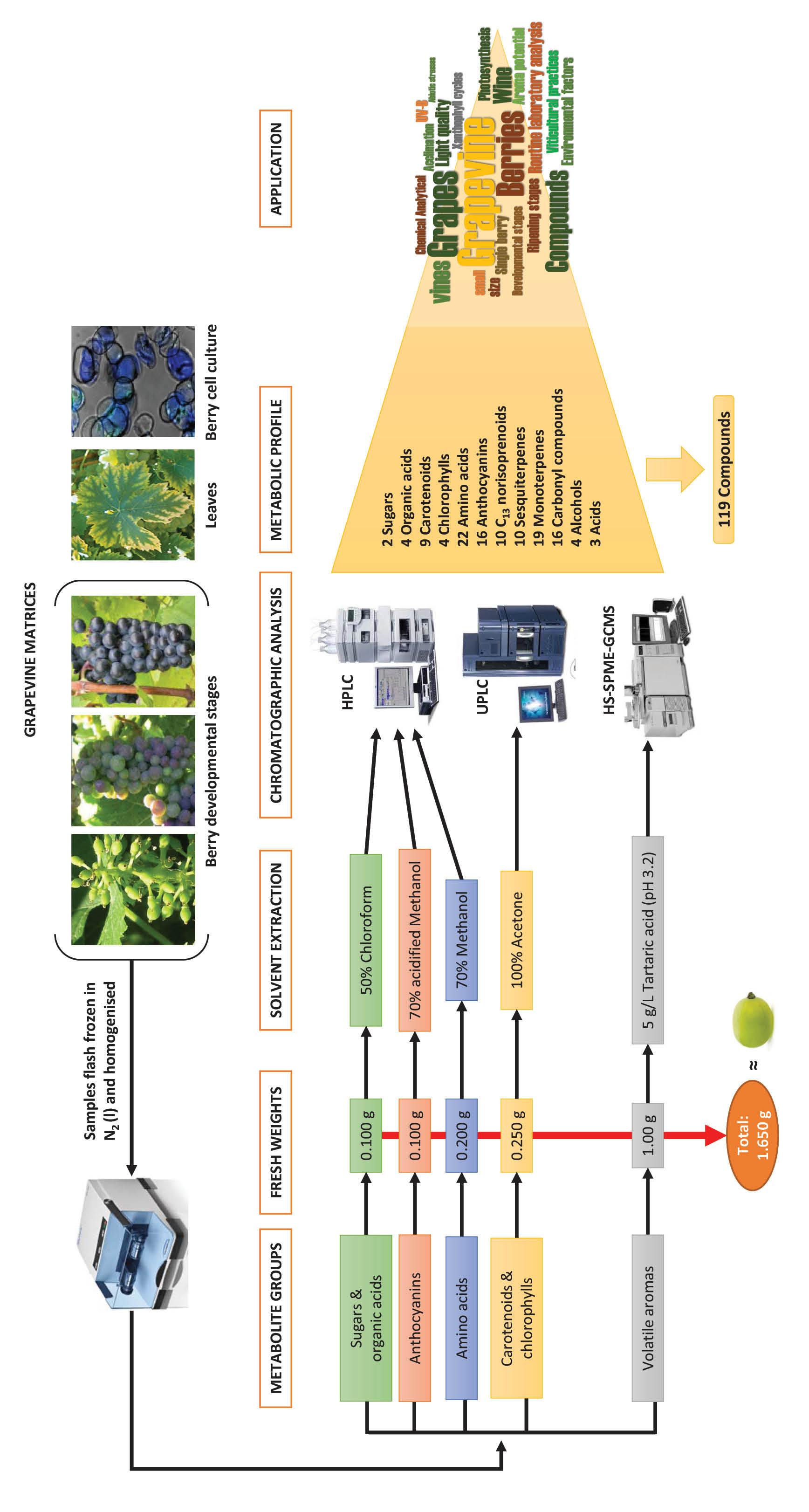 Analytical methods to measure grape metabolites (Figure 1)