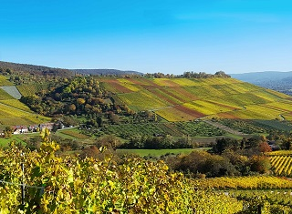 Catch up on viticulture trends