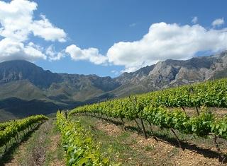 The effect of nitrogen, phosphorus and potassium fertilisation on grapevine nutrient status (Part 2)