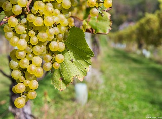Prescient Chardonnay Report 2017