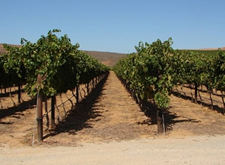 Potential water saving at high production vineyards