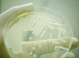 Non-culture based technologies reveal novel microbes in wine