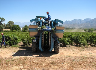 The influence of vineyard mechanisation on wine