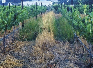 """""""Weed"""" species suitable for cover crop management in vineyards"""