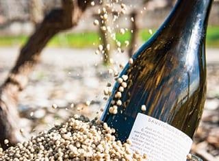Impact of grapevine nitrogen fertilisation on YAN levels in the juice