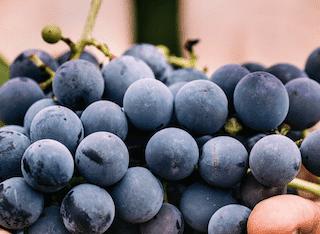 Global wine harvest bounces back after 2017 lows