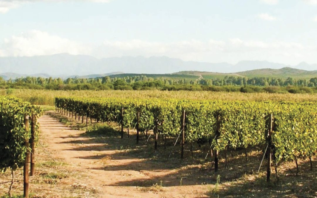 Vineyard row orientation (Part 2) – inter-row wind and canopy humidity