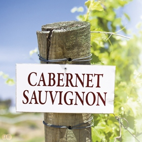 Cabernet Sauvignon responses to irrigation using winery wastewater