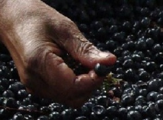 CSSAWU and Robertson Winery reach an agreement