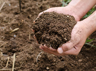 Soil preparation with special emphasis on the re-compaction of vineyard soils
