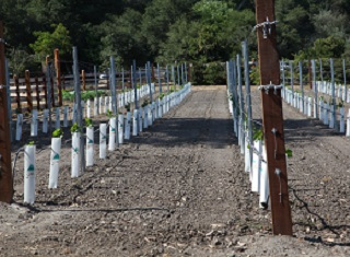 Settling a new vineyard?