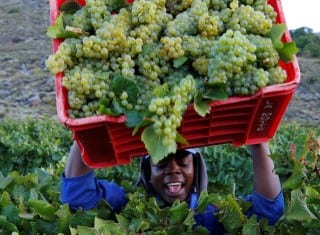 SA's fruit and wine producers pledge support to initiative clamping down on forced labour practices