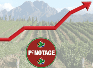 Pinotage labelled SA wine's 'fairy-tale' success story with record growth and turnover