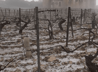 Violent hailstorms wipe out R20 billion worth of bubbly in Champagne region