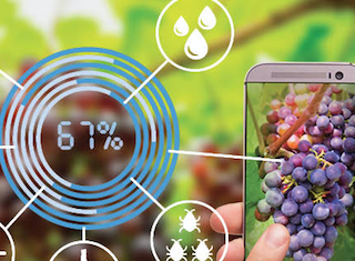 WineTech and LaunchLab introduce SA Wine Industry Innovation Challenge