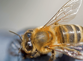 Farmers and beekeepers take hands to ensure a better future for honey bees