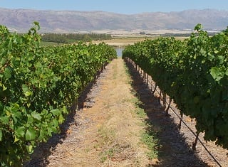 The role of leaf and soil analyses in vineyard management (Part 1)