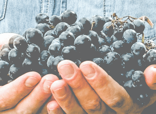 Call for Entries  BRIT/FIVS International Sustainable Wine-growing Competition