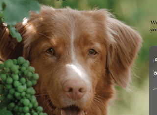 The #SADogsofWine competition is back!