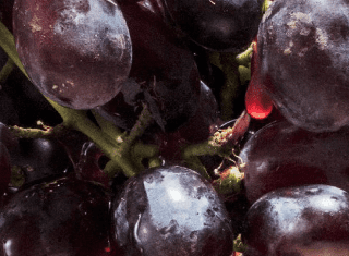 Better Grapes Wine Fair highlights real progress in the South African wine industry