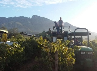 Vinpro Production Plan survey: The 2019 vintage – the wheels have started turning for producers in the South African wine industry