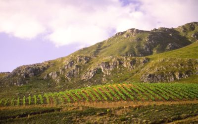 WWF Partnership with South African wine set to make inroads in international markets