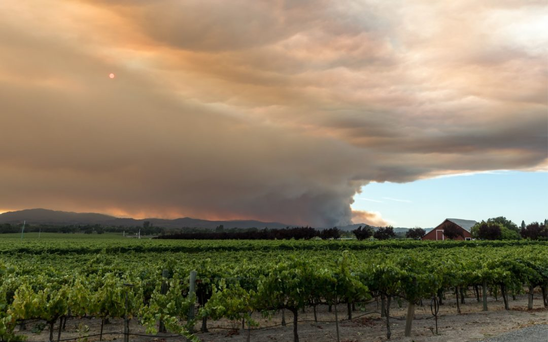 Up in smoke: Wildfire season and the risk of smoke taint