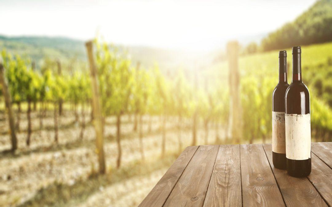Promising 2021 SA wine grape harvest expected
