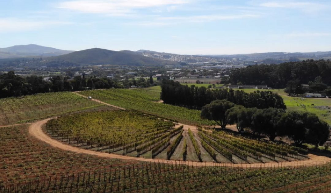 Viticulture research turns over a new leaf