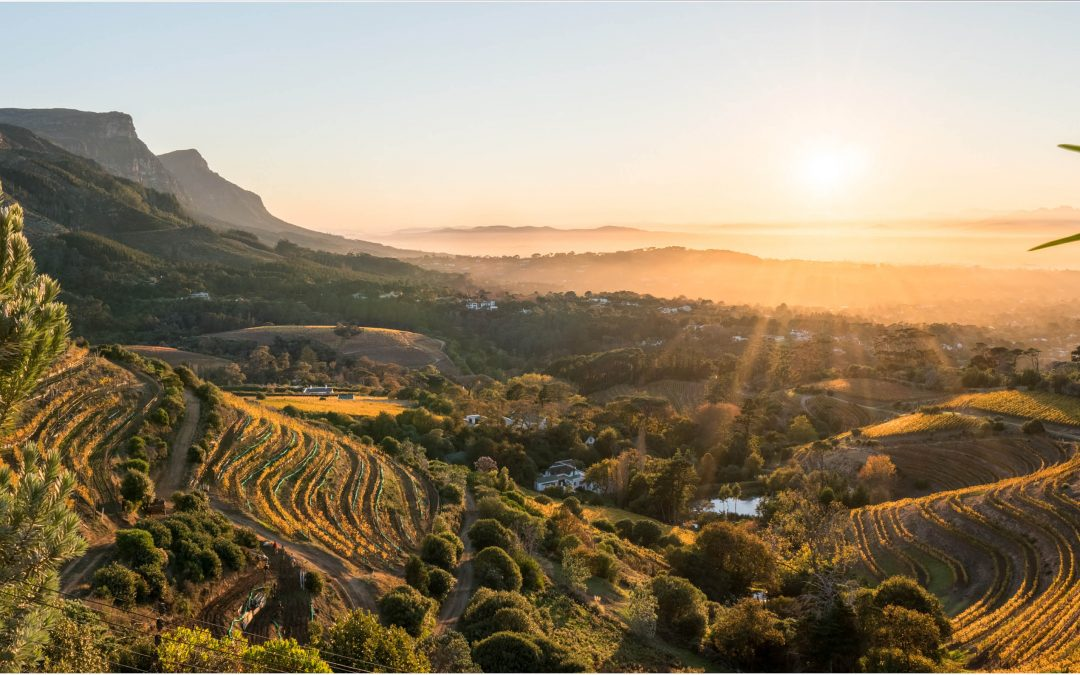 Wine industry and key stakeholders join forces to define sustainability